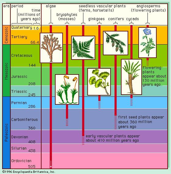 The appearance of plants — and so of soil — in the geological time scale